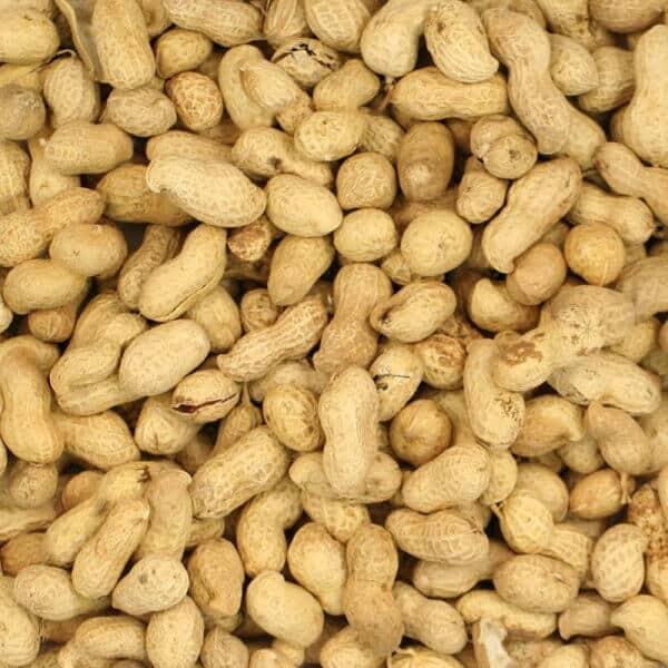 monkey nuts peanuts in shell